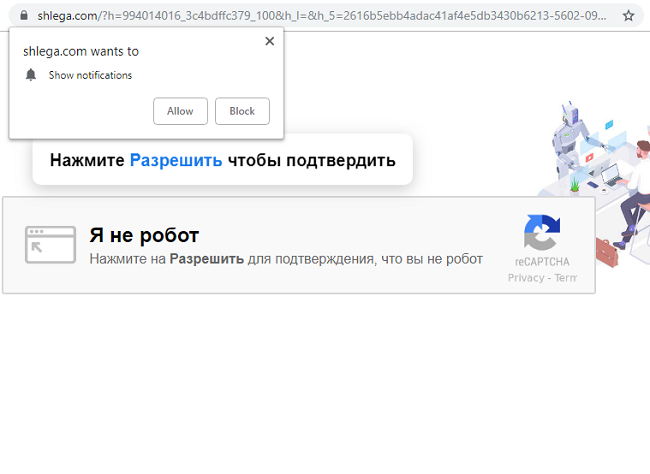 Shlega.com